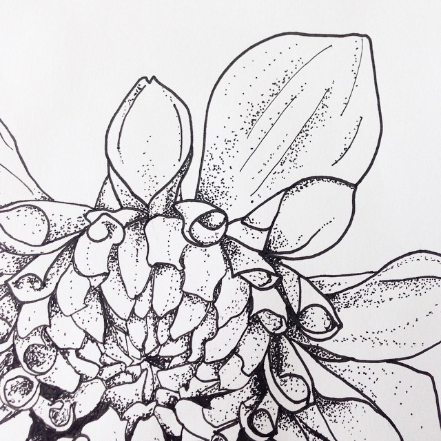 Dahlia drawing for a temporary tattoo