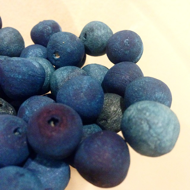 Blue #PrivetBerries waiting for stems
