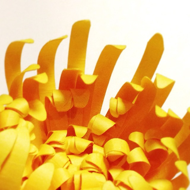 Paper mums reaching upward #paperflowers