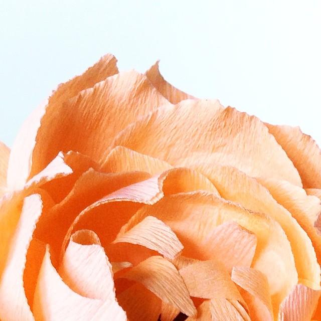 Bloom state #crepepaper