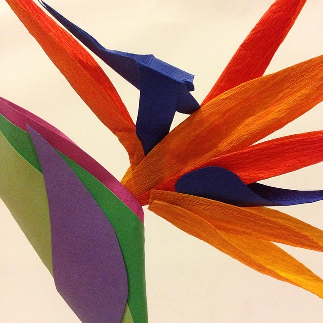 Bird of Paradise #paperflower