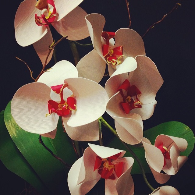 Orchids in bloom!! #paperflowers #orchid #papersculpture #terrarium