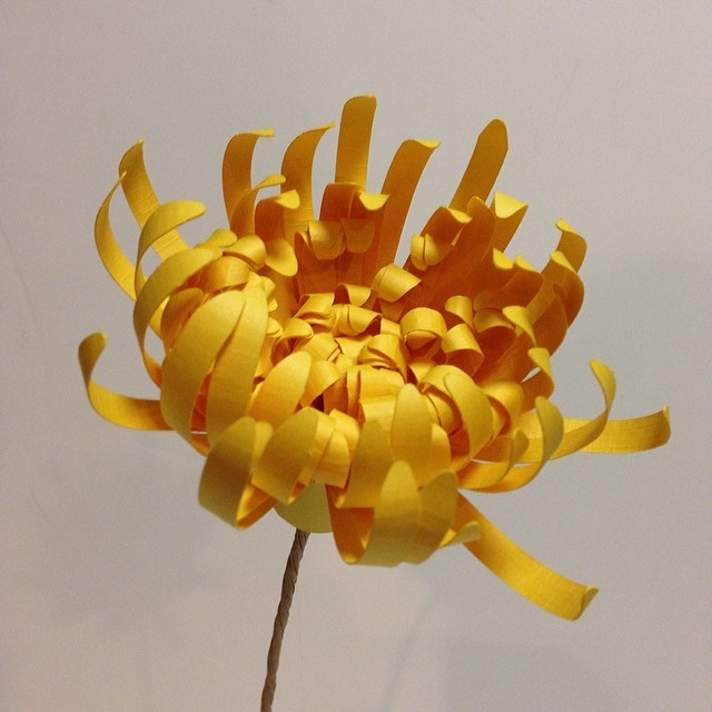 Paper Spider chrysanthemum :)
