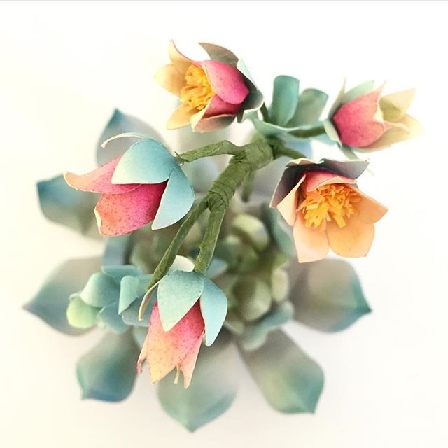 Flowering_succulent__view_from_the_top___flower__paperflower__pin__paperart__succulent__echeveria__papersucculent.jpg