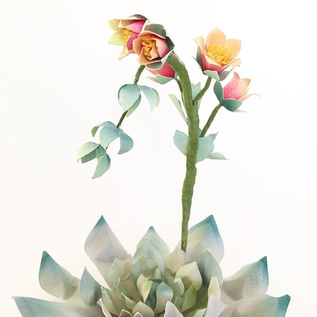 Paper_flowering_succulent__I_thought_it_wasn_t_possible_to_make_a_paper_succulent_look_real__but_different_paper_artists_have_inspired_me_to_once_again_push_deeper_into_the_craft_and_explore_what_is_waiting_beneath_the_surface.___paperflowers_pin_god.jpg