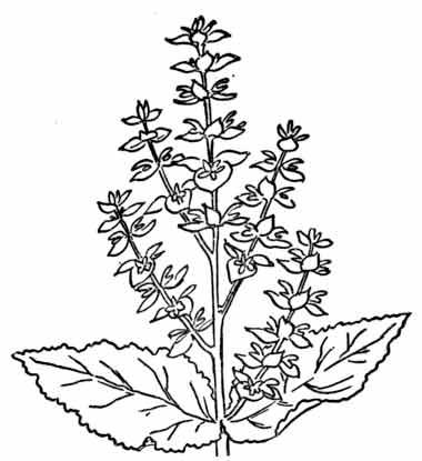 herb2.jpg
