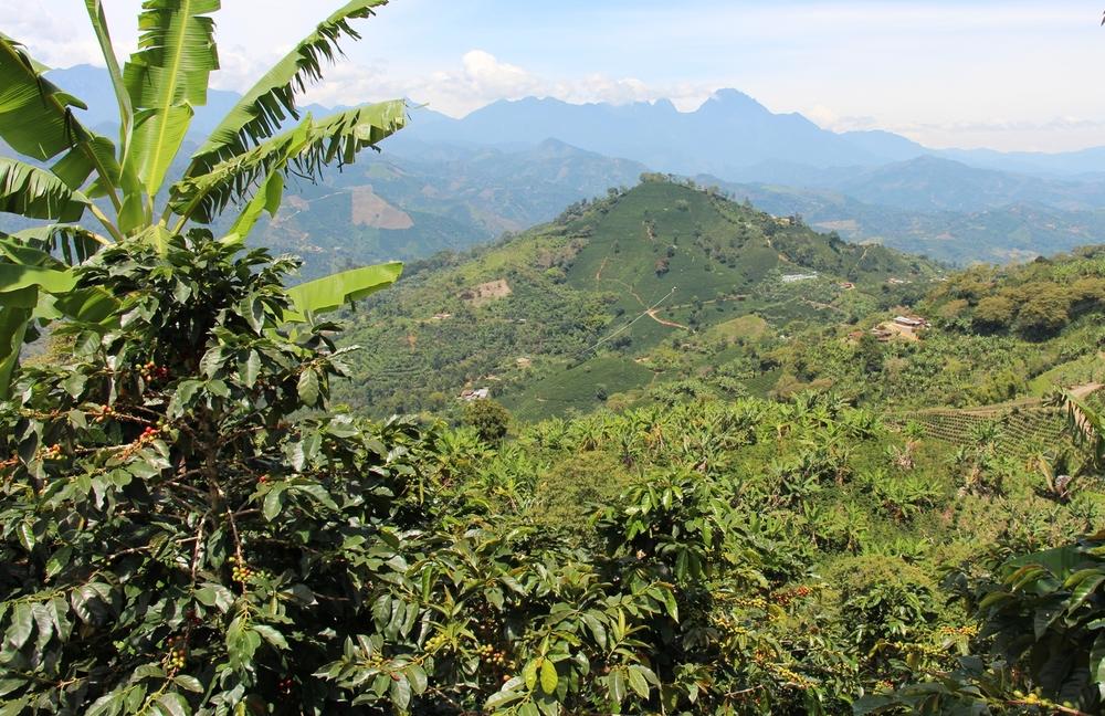 Coffee plantations in Antioquia ©zipacoffee
