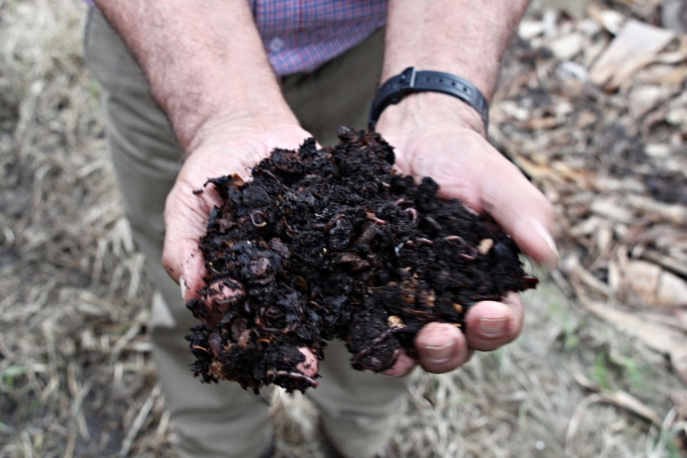 When ready, the fertile compost is spread throughout the finca