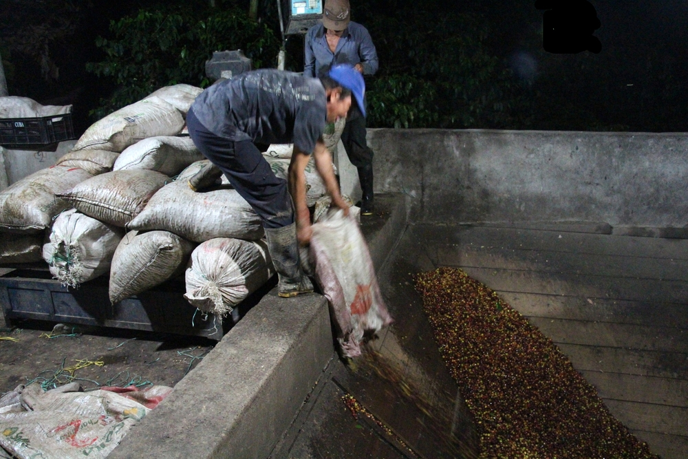 Tipping coffee into the vat