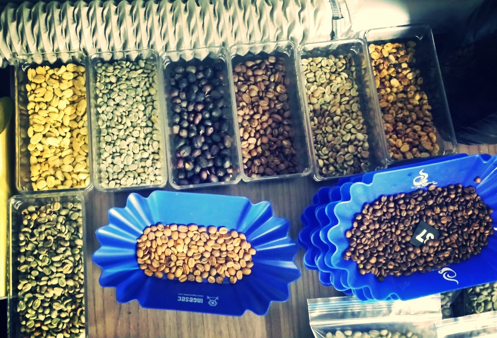 Coffee samples‏
