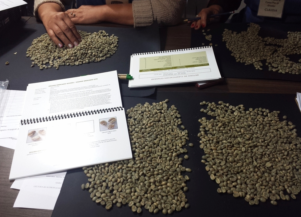 Inspecting green coffee for defects