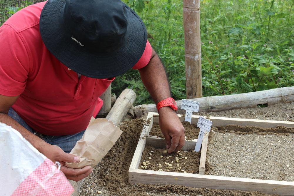 Planting new coffee varieties
