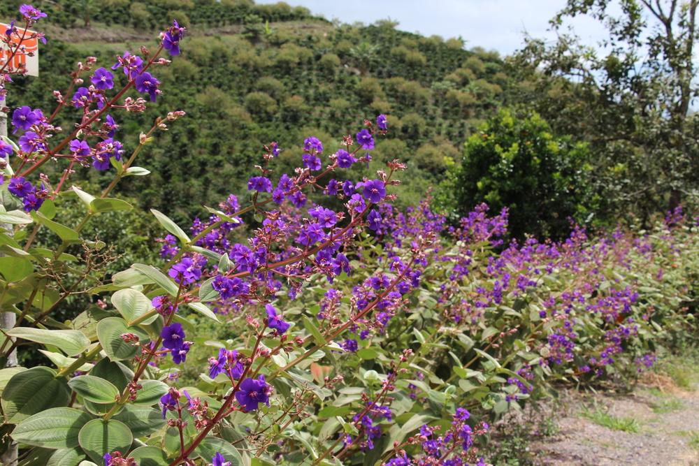 Flowery finca's path