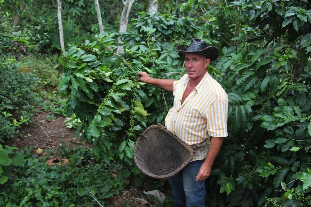 Omar Ramirez's coffe plantation - Escambray
