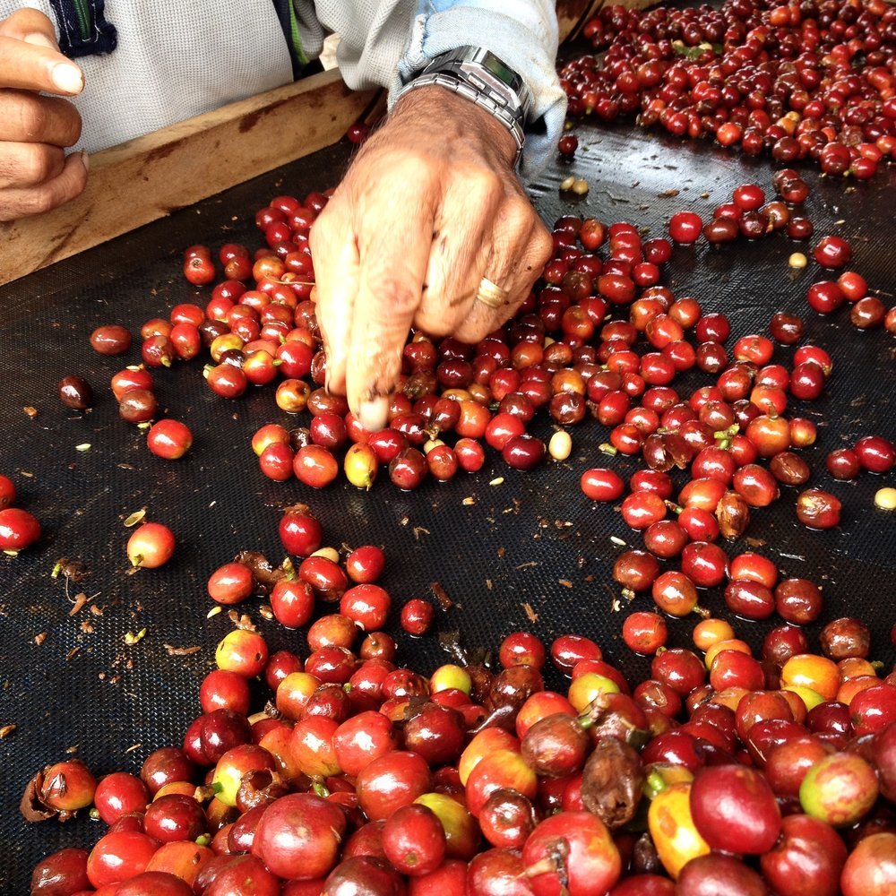 Selecting the best cherries