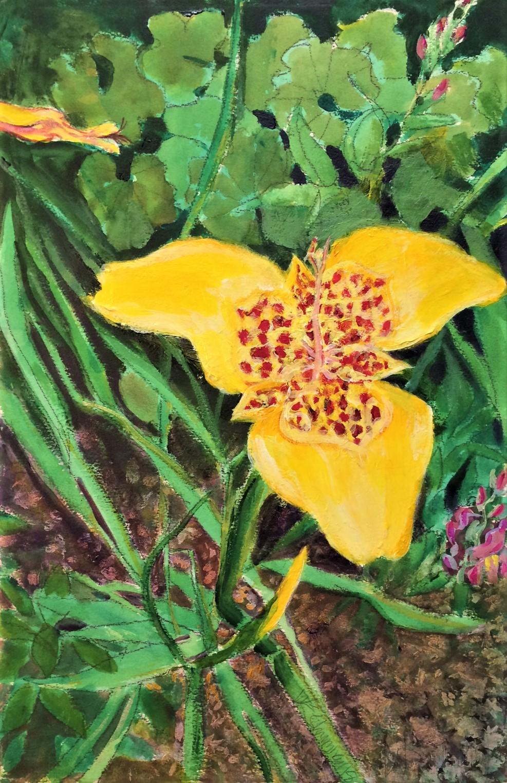 Tigridia W.E.Shumway acrylic 15(w) X 22.5 inches 225.00.JPG