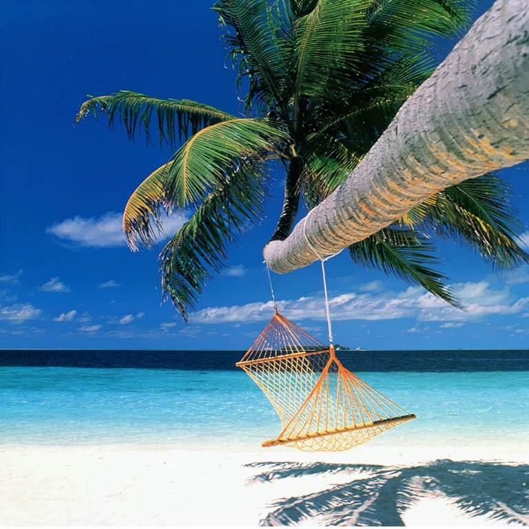 beach-hammock-nature.jpg