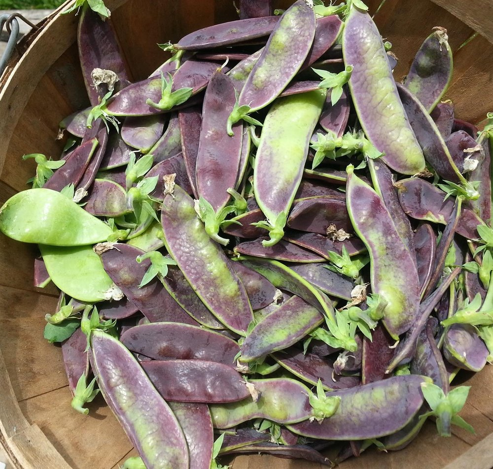 Shiraz snow peas