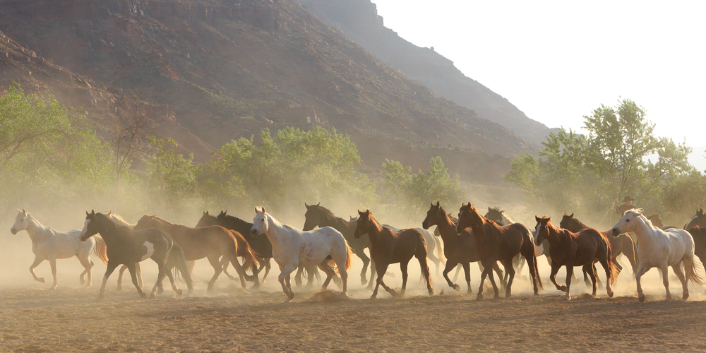 Horses and the American West