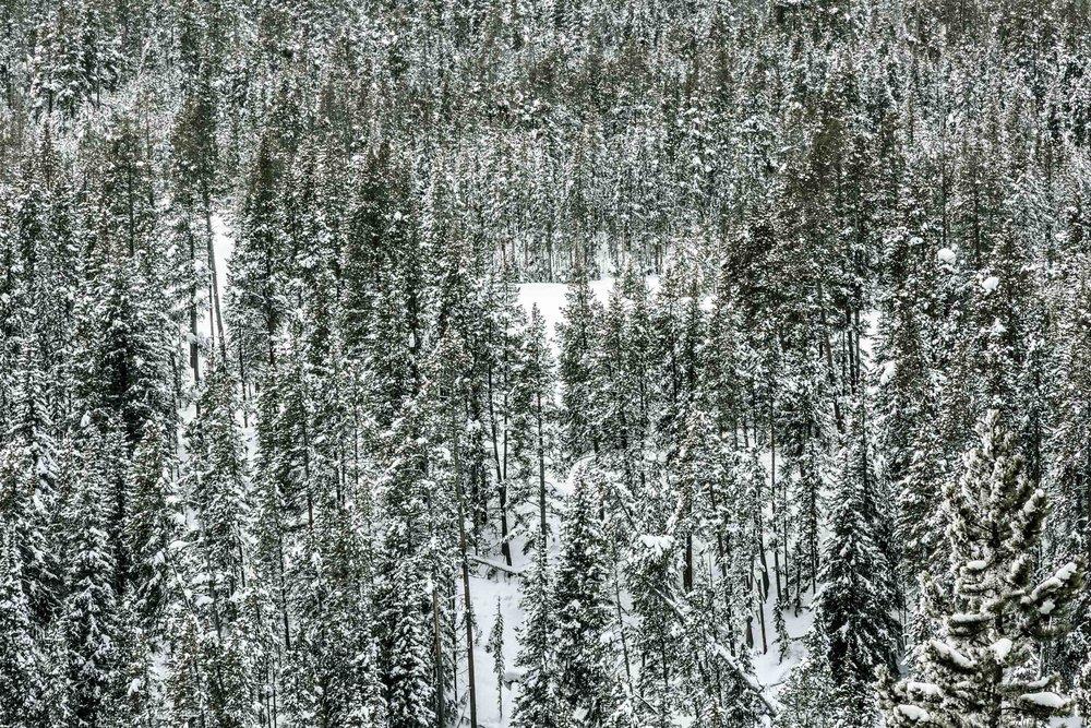 02022016_Yellowstone_08774.jpg