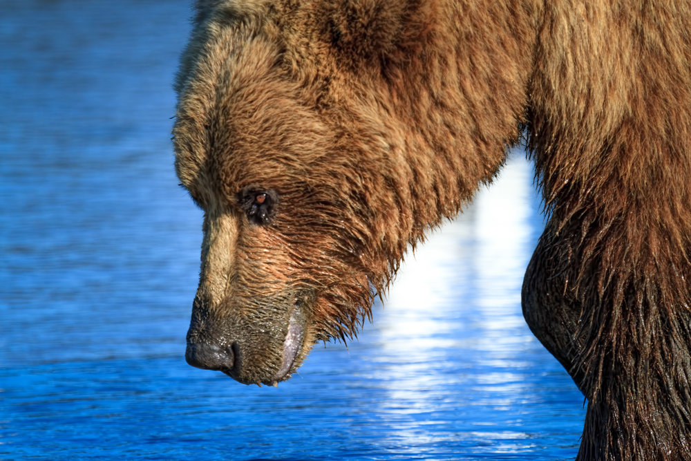 07222013_Alaska__MG_5075-686.jpg