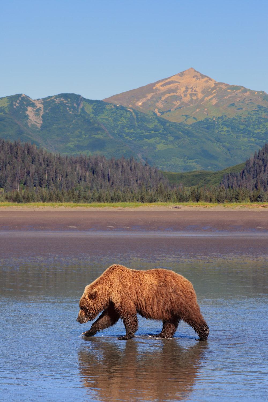 07222013_Alaska__MG_6841-704.jpg