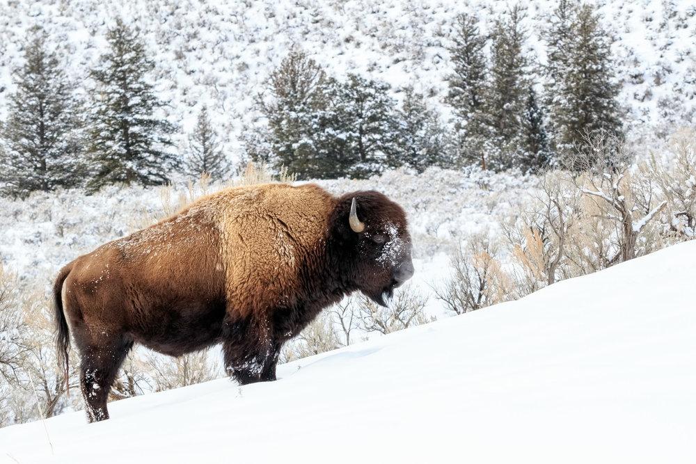 02012016_Yellowstone_07916-6.jpg