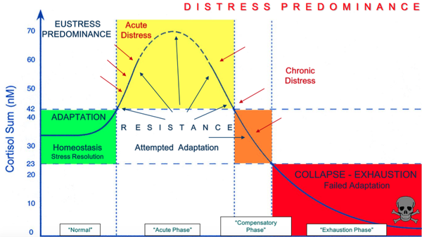 The three phases of HPA Axis Dysfunction