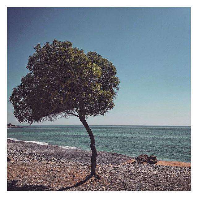 Barcelona 🌳💨🌊☀️ #Barcelona #Spain #coast #beach #tree #blue #green #sand #sun