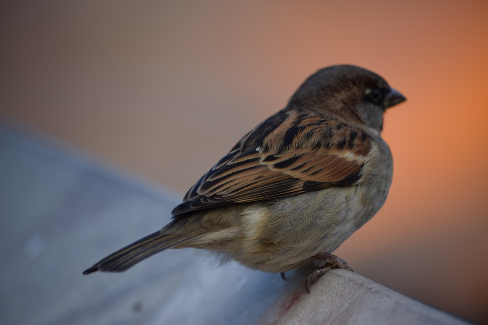 I love pictures of birds. Now I get birdwatchers!