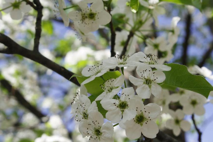 Blossoms // Ji Soo Ryu '15