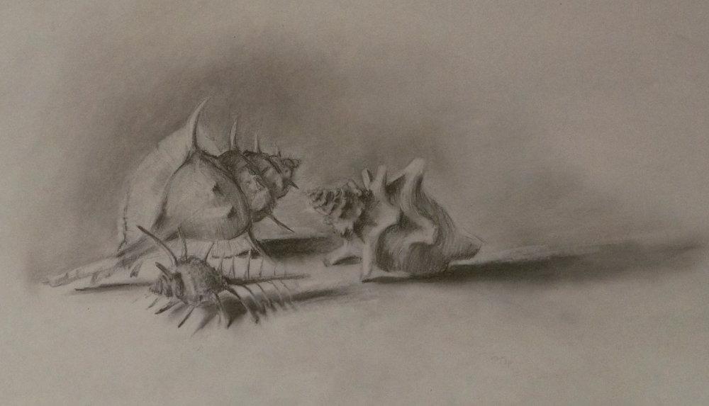 Seashell4.jpg