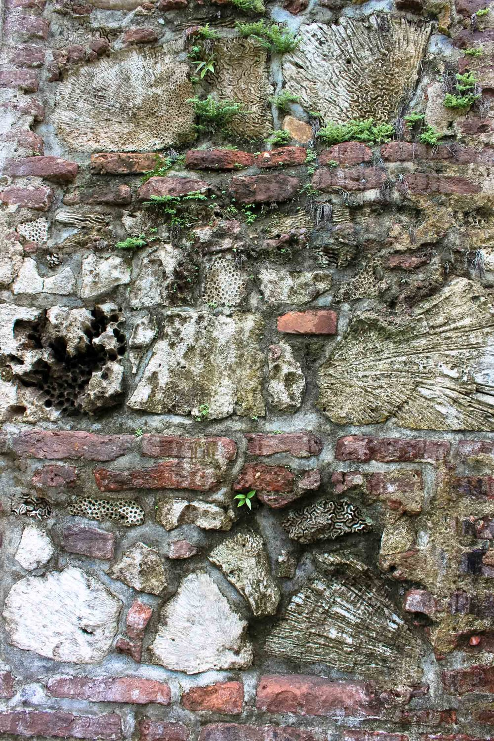 Sea shells were used to build the walls