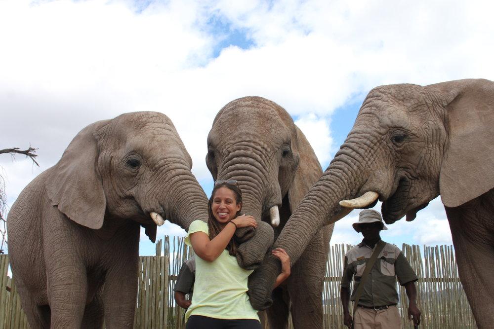 Elephant hugs in Oudtshoorn