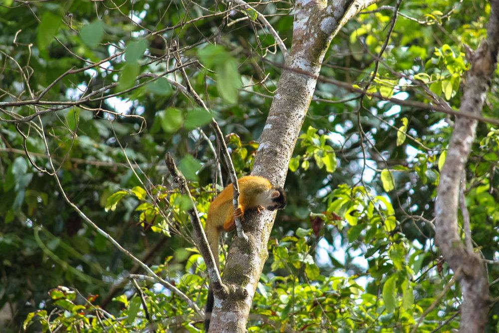 Corcovado National Park - Drake Bay Costa Rica