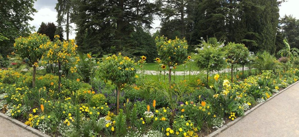siegoldenflowers.JPG
