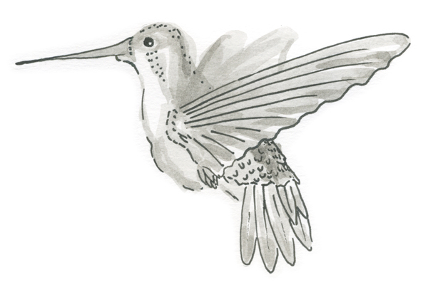 colibri-detallado.jpg