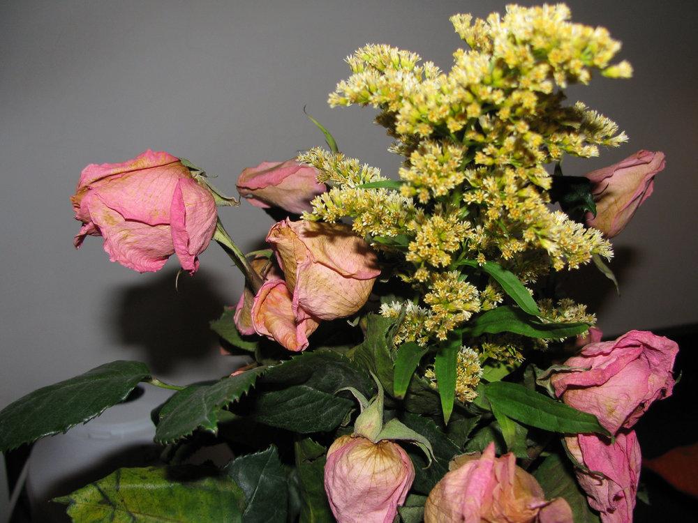 rosas.jpg