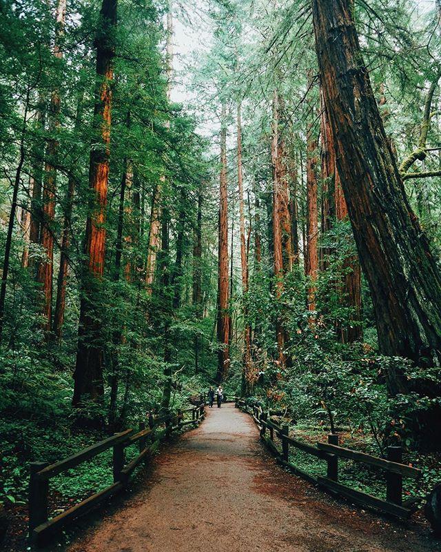 Muir Woods CA . . . #travel #travelphotography #america #muirwoods #sanfransisco #travelfilm #canon #5d
