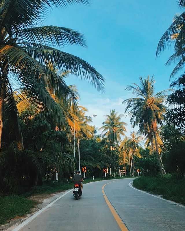 Biking around Koh Phangan to secret mountain. . 📷: @ersanbeskardes . . . #travel #travelphotography #Thailand #kophangan #palmsfordayz