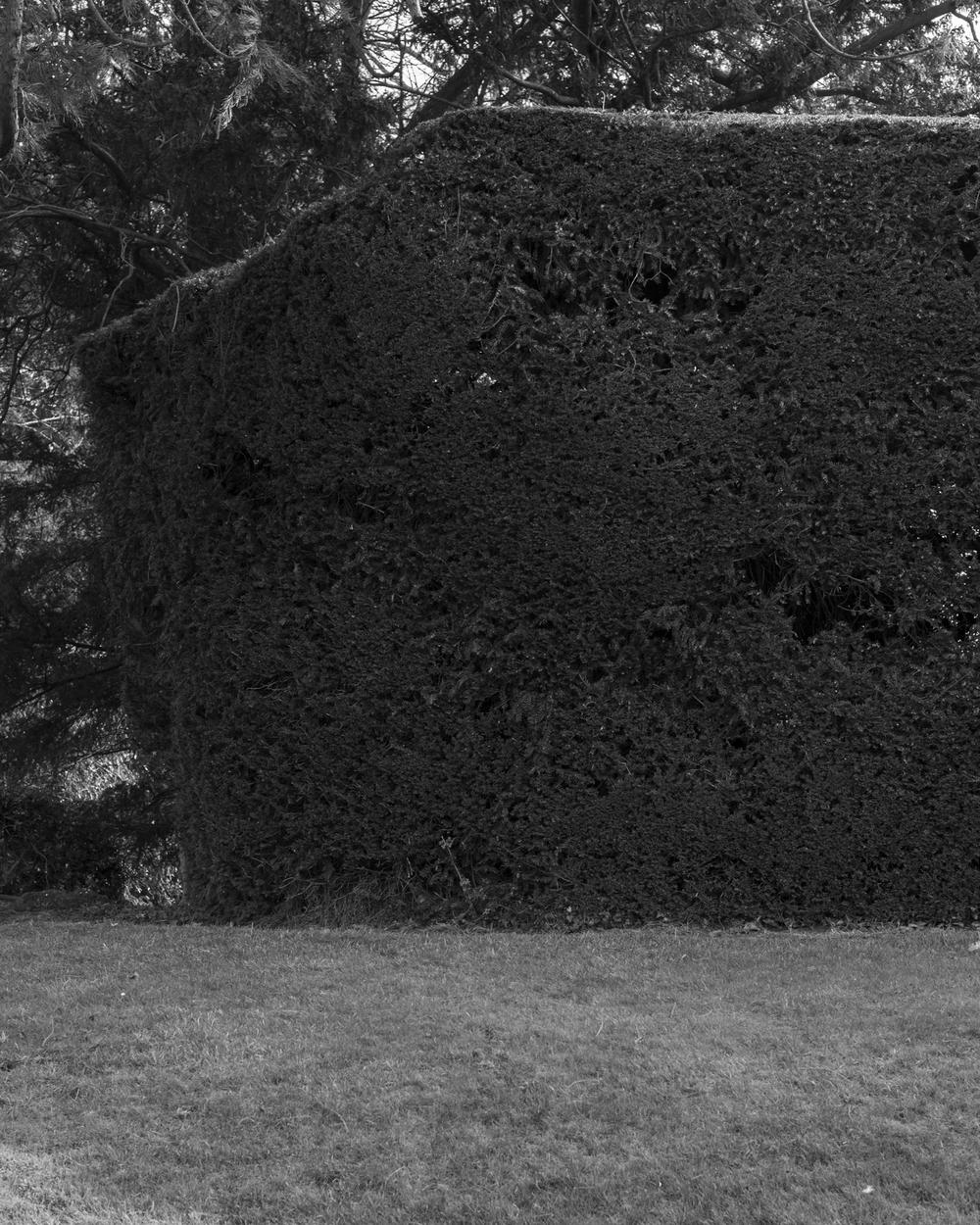 Hedge_2443.jpg