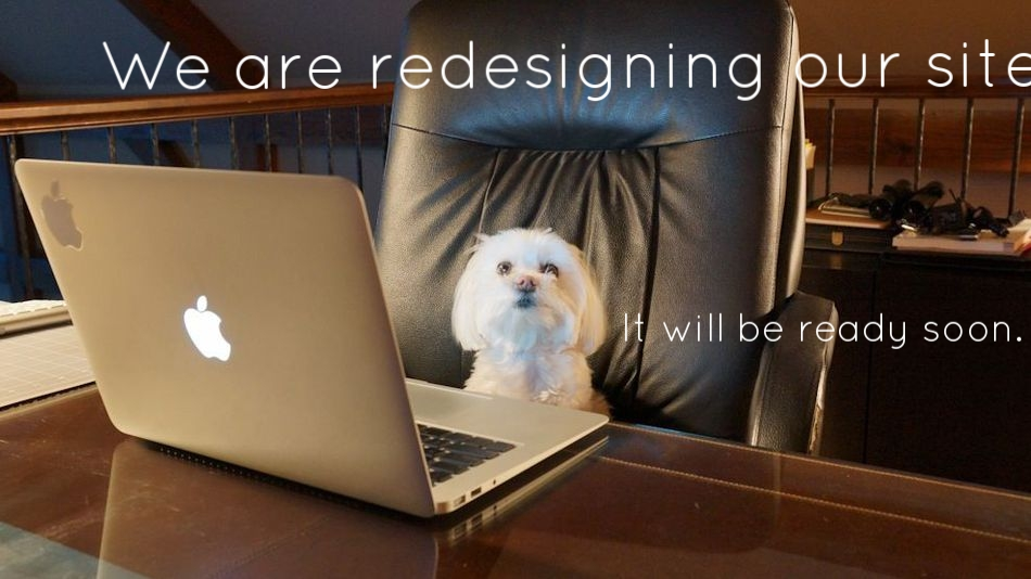 little white dog at computer.jpg