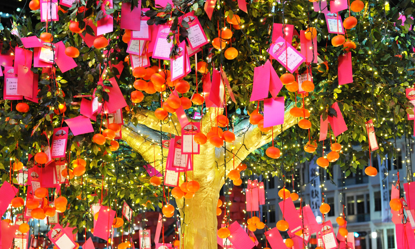 CCNY-Wishing Tree.jpg