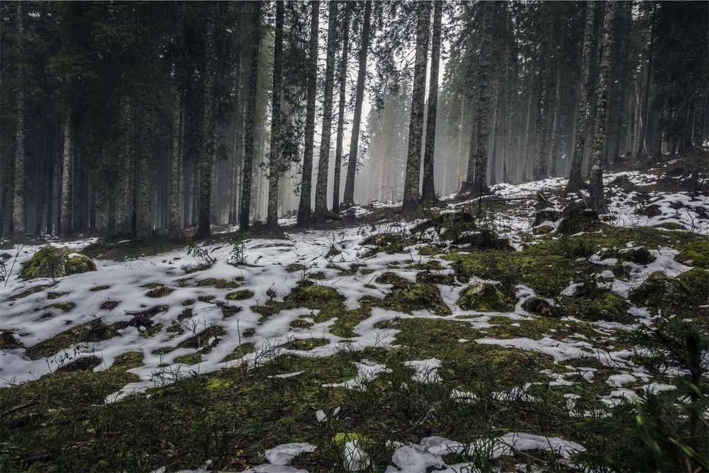 Krippenwanderung in Waldbreitbach