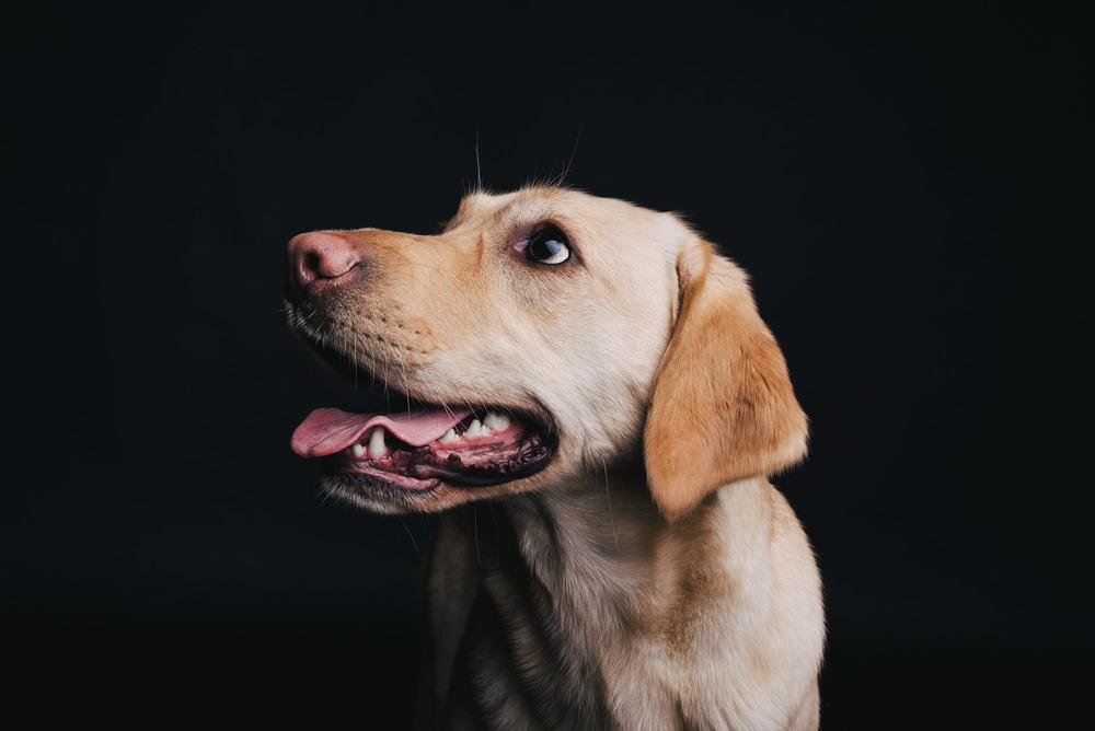 Hundefotografie Studio