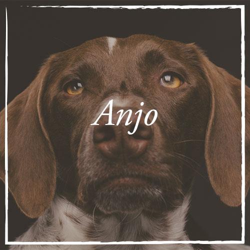 Anjo.jpg