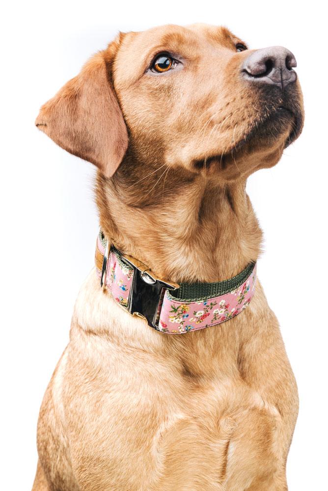 """Finja mit ihrem Halsband """"Pauline"""" von Hundeklunker"""