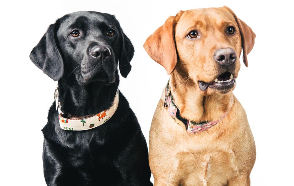 Summer und Finja mit ihren Sets von Hundeklunker