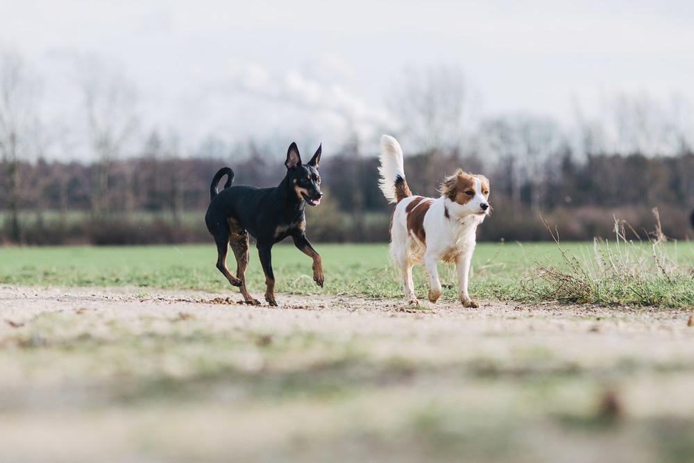Mojo und Hazel gehen erst mal ganz gemütlich...