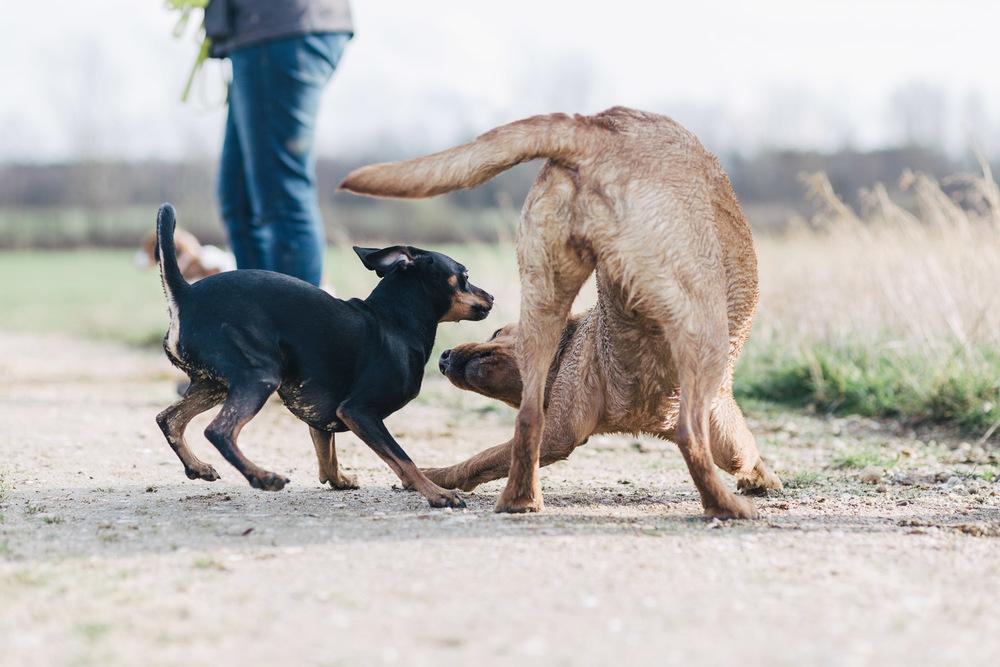 Mojo und Finja beim Spielen